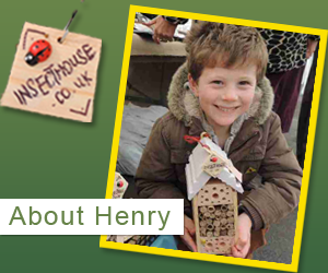 henry and insect house